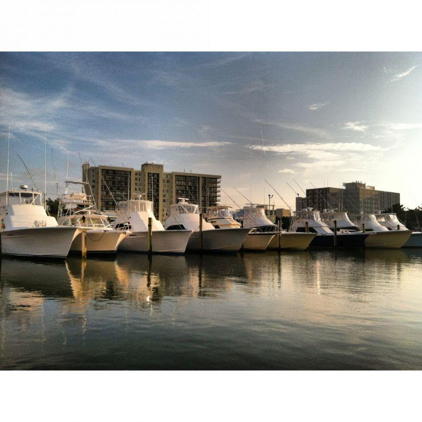 October 21 2014 virginia beach fishing center ltd for Rudee inlet fishing report