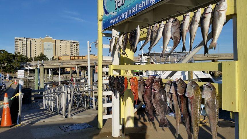 Deepdrop2 virginia beach fishing center ltd for Va beach fishing center