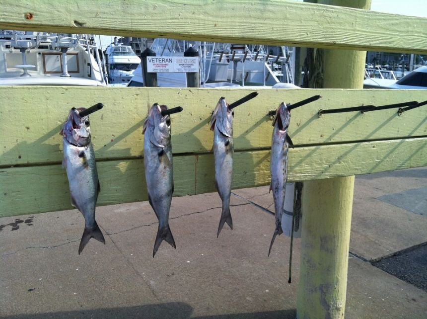 12 virginia beach fishing center ltd for Va beach fishing center