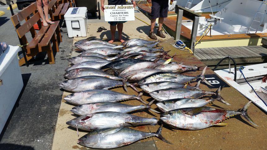 20150601 151636 virginia beach fishing center ltd for Va beach fishing center