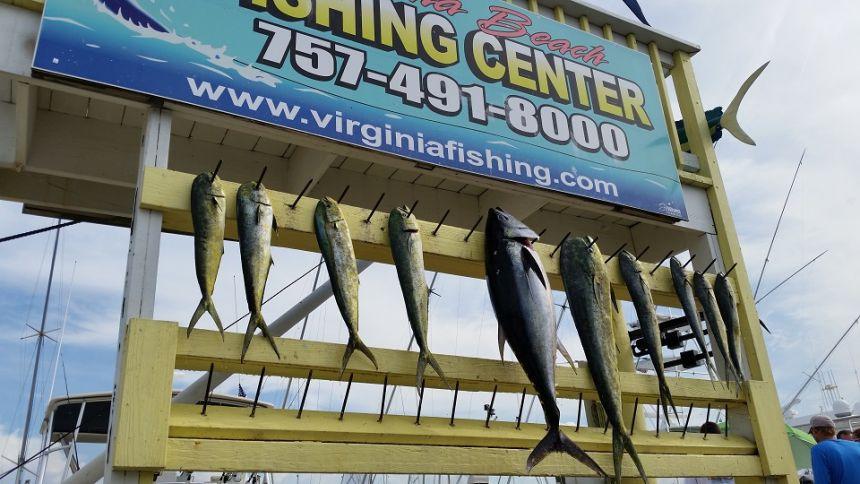 Release flags mahi tuna virginia beach fishing for Head boat fishing virginia beach