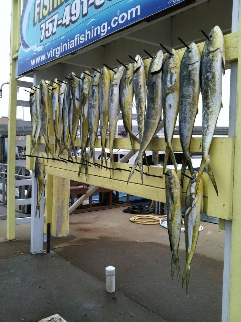 Photo 6 virginia beach fishing center ltd for Va beach fishing center