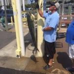 Some Mahi on the Docks!