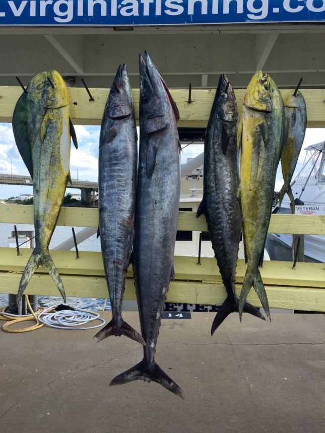 Limit of spanish inshore wahoo and mahi offshore for Head boat fishing virginia beach
