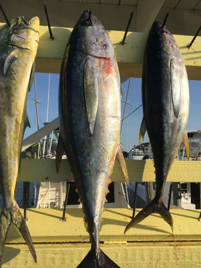 High winds and rough seas virginia beach fishing center for Rudee inlet fishing report