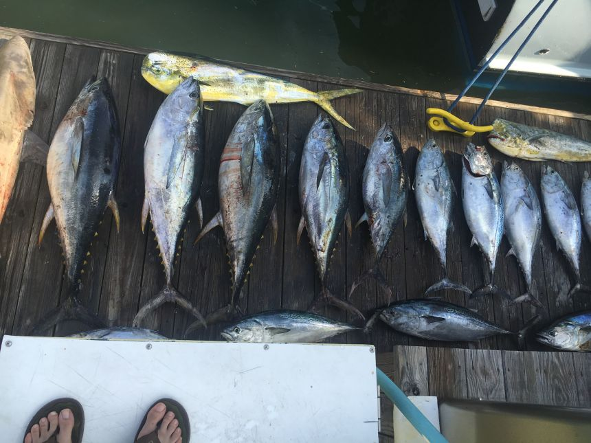 Tuna on the docks early virginia beach fishing center for Rudee inlet fishing