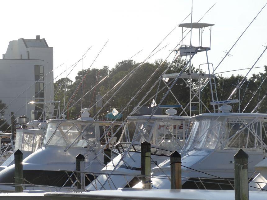 Dsc04333 virginia beach fishing center ltd for Va beach fishing center