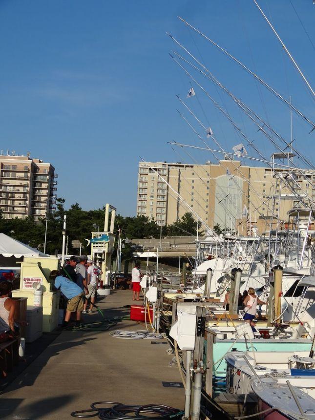 Dsc04335 virginia beach fishing center ltd for Va beach fishing