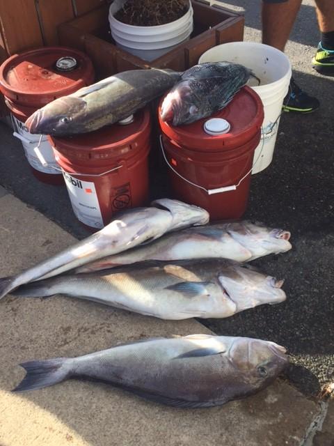 Bottom fish and marlin virginia beach fishing center ltd for Rudee inlet fishing report