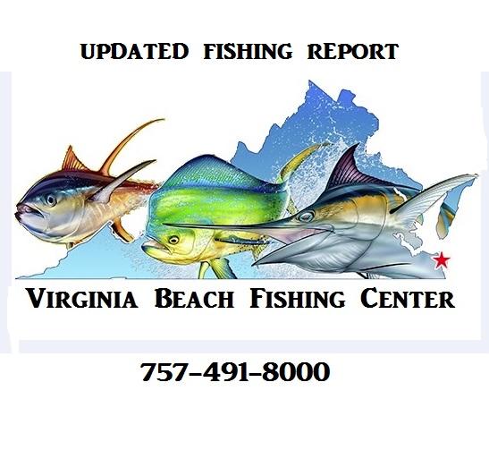Updated january report virginia beach fishing center ltd for Va beach fishing report