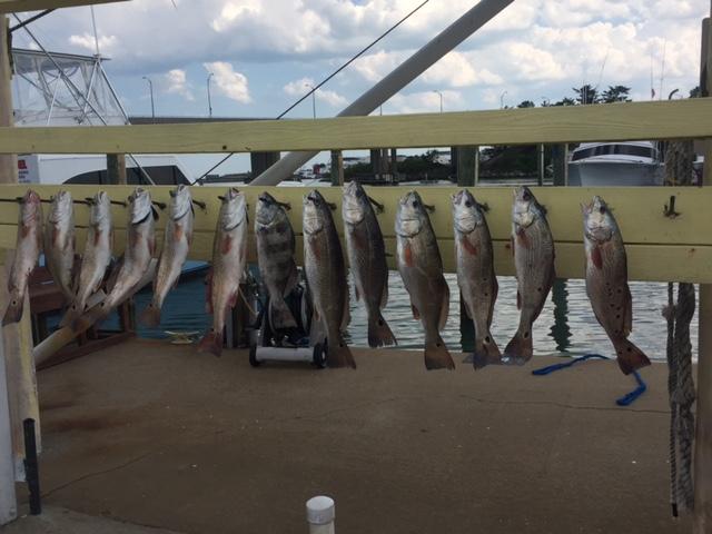 Img 3347 virginia beach fishing center ltd for Va beach fishing center