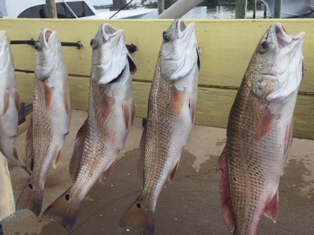 Great action in rudee inlet virginia beach fishing for Rudee inlet fishing