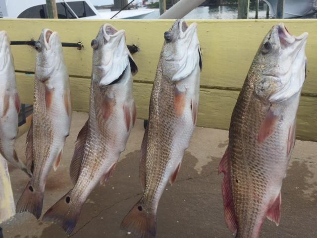 Great action in rudee inlet virginia beach fishing for Rudee inlet fishing