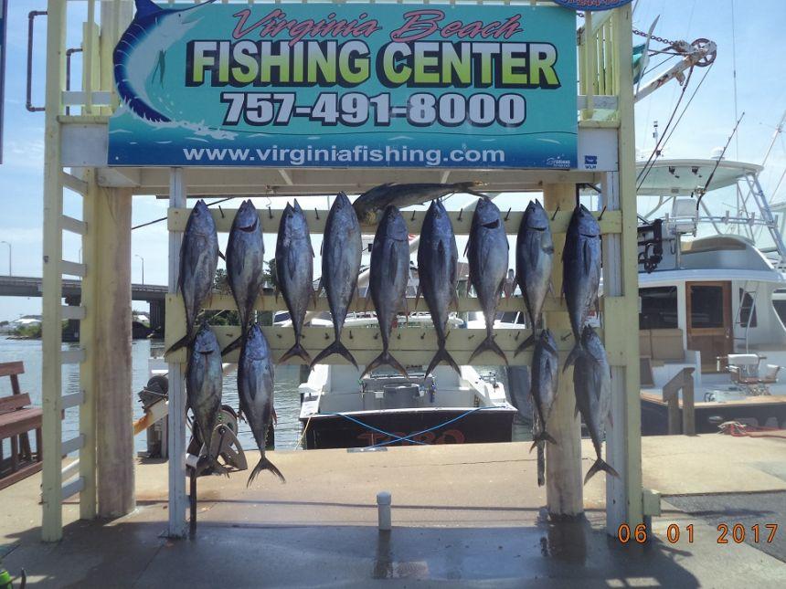 Tuna tuna tuna virginia beach fishing center ltd for Va beach fishing center