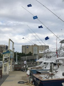 White Marlin and Mahi