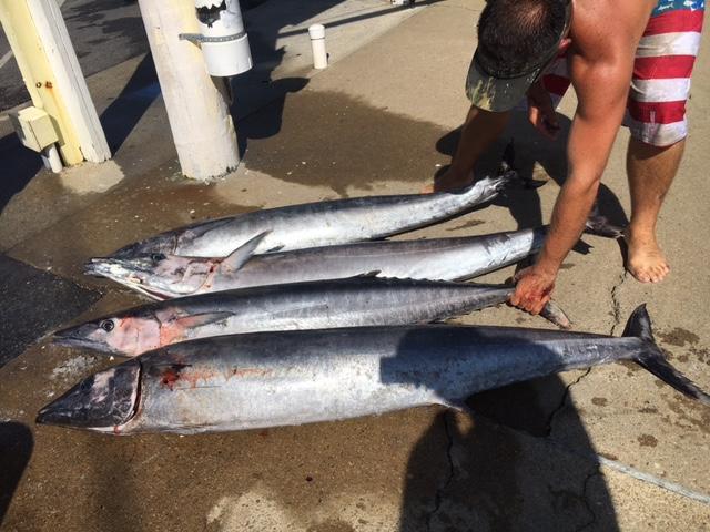 Wahoo marlin and bottom fish virginia beach fishing for Head boat fishing virginia beach