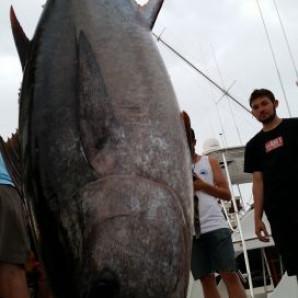 Awesome Start To The Virginia Beach Tuna Tournament