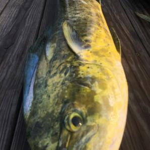 Tons of Billfish and Mahi!