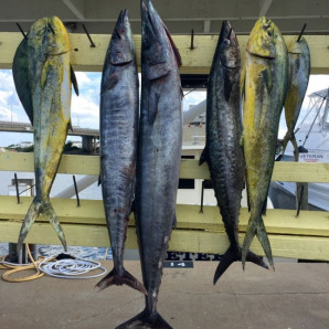 Limit of Spanish inshore, Wahoo and Mahi offshore!