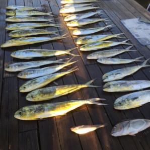 Marlin Flags Flying And Mahi On The Dock