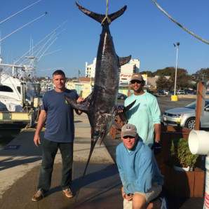 Bluefish Inshore And A Swordfish On The Docks