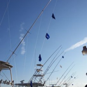 Marlin Flags Flyin'