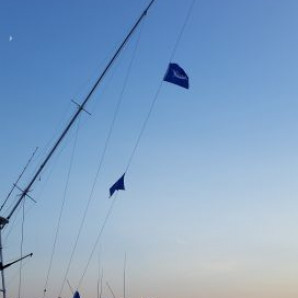 White Marlin Flags Flying!