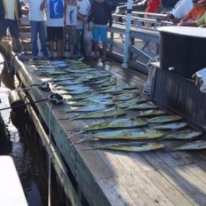 Bluefish & Mahi