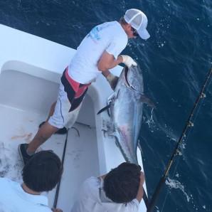 Bluefin Tuna On The Docks