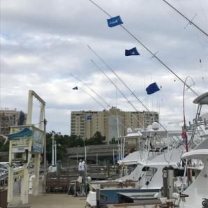 White Marlin and Mahi