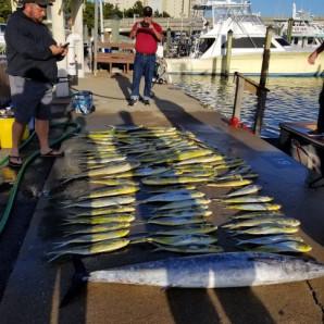 Mahi Offfshore…Bluefish Inshore